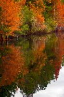 Even Florida has Autumn colors by drewii57