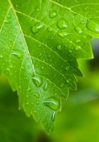 water on leaf by Sanji1989