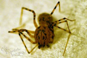 Spider - I by Claw-Markes