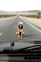 Bunnie Suicide II  -Road Kill by dwingephotography