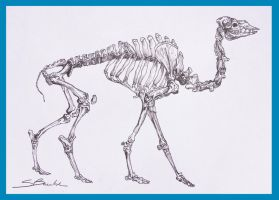 Camel Skeleton by leady92