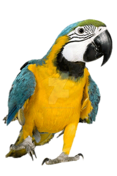 Macaw by BestRioLover