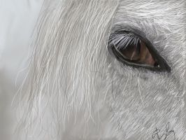 .::horse eye painting::. by flame1111