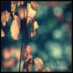 Autumn - Unidentified by Karl-B
