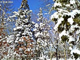 A Winter Display by JDM4CHRIST