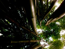 bamboo 3 by PhaipherGirl