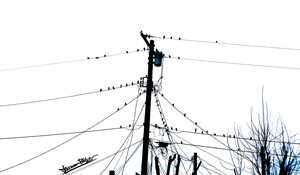 Birds on Power Lines 3 by skinsvideos21
