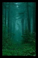 Misty Woods by NerghaL