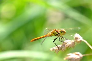 Dragonflies and other insects by Lydiie