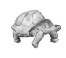 Quick 100 year old turtle by Alisha-town