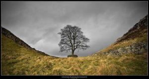 Sycamore Gap - Reprocessed by Punt1971