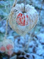 chinese lantern by hoernchen610