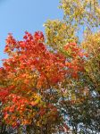 Autumn Leaves II by dolphinandcow