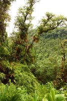 Rain forest 5 by CAStock