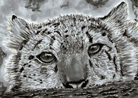 Snow Leopard - ACEO by Sofera