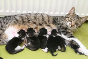 Esther and her newborn kittens by FeltHanded