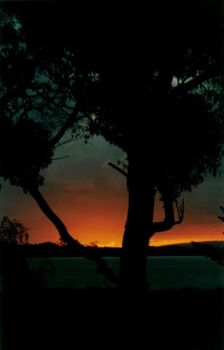 Tree at Sunset by chilichick