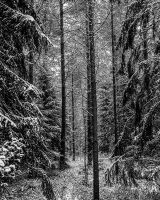Winter Forest by xpsr