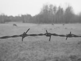 barbed wire by ettelienne