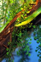 Violently Green Snake by FallingClockwise