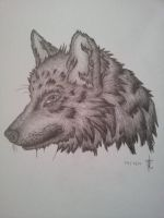 Wolf Head by katiee-e