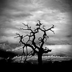 Dumfries tree ghost by Coigach