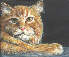 hairy ginger moggie by acrylicwildlife