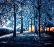 Infrared Forest Sunset by jordan-me2