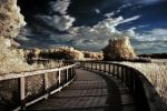 Along the Way by Traciebells