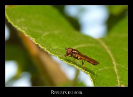 Sunshine on a fly's back by lasaucisse