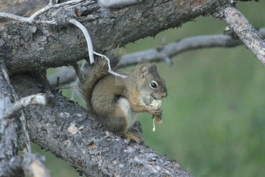 Squirrel on a Tree by Lidgerbewis