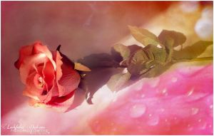A rose for you by FrancescaDelfino