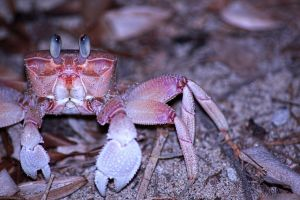 the crab dude by douf