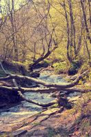 Forest River by Mithertiths