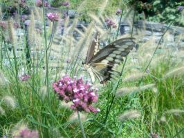 Swallowtail with purple flowers by aradia1015