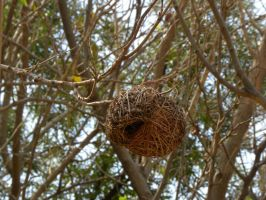 Nest by RiverKpocc