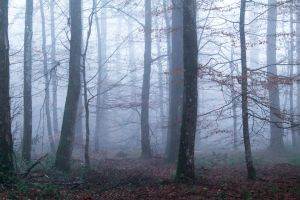 Foret112 by hubert61