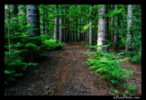 Through the Woods by aFeinPhoto-com