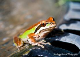 Garden Frog by Kimiko-chan1