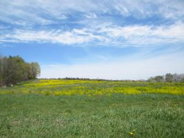 Field of yellow stock by asphyxiate-Stock
