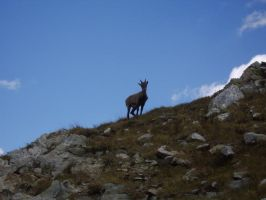 Ibex and the mountain by FraterSINISTER