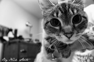 Lucy Whiskers by Strikethecamera