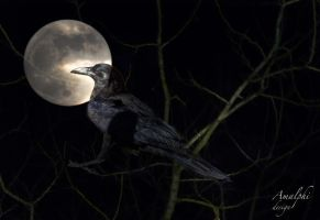 Fly Me To The Moon by Amalphi