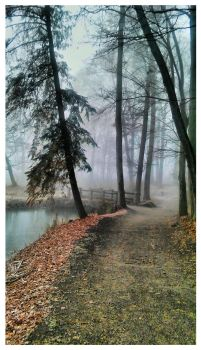 Misty road by signum2