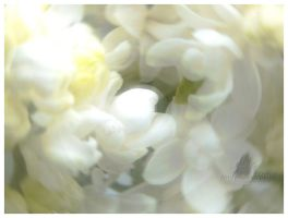 A Blur of White Lilac by TonsofPhotos