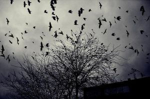 the birds by Photographis