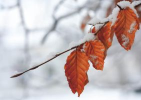 Color in the Winter by olelovold