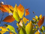 October rust on a blue sky by Melusine8