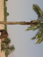 palm tree in Jordan Desert by mayah-stock