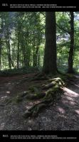 Old German forest 2 by Mithgariel-stock